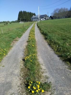 chemin des pissenlits